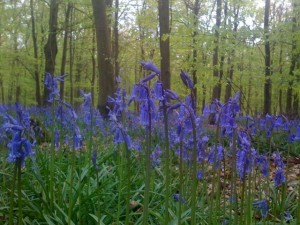 Blue Carpet in the Woods